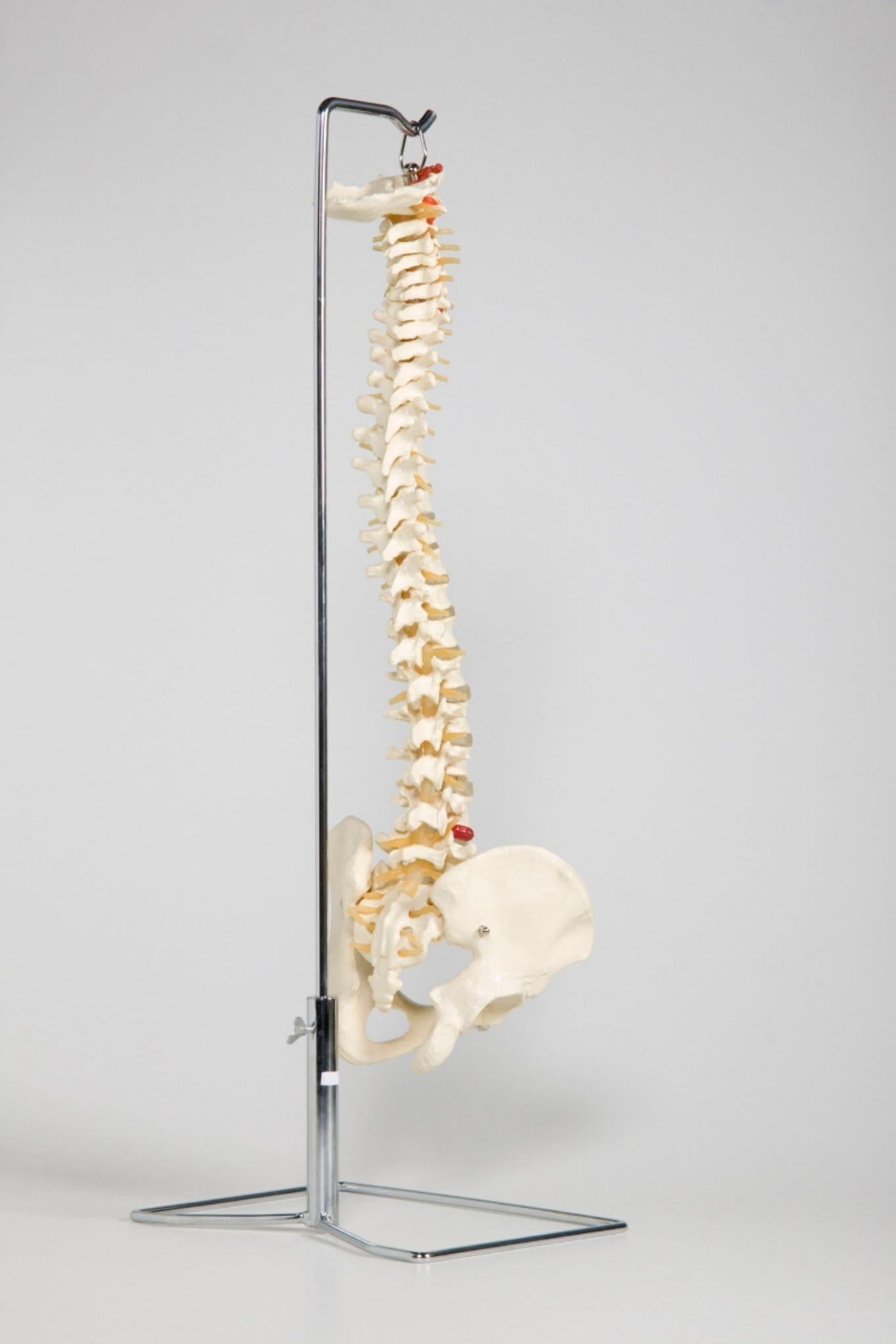 chiropractor woolooware
